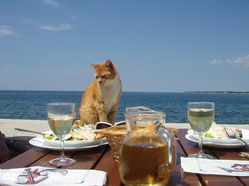 хорватский котька