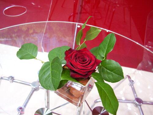 Роза**