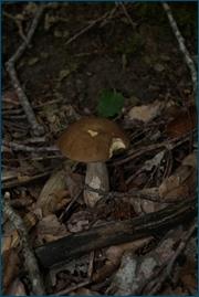 http://img-fotki.yandex.ru/get/3201/15842935.143/0_d09c6_50aa5e0_orig.jpg