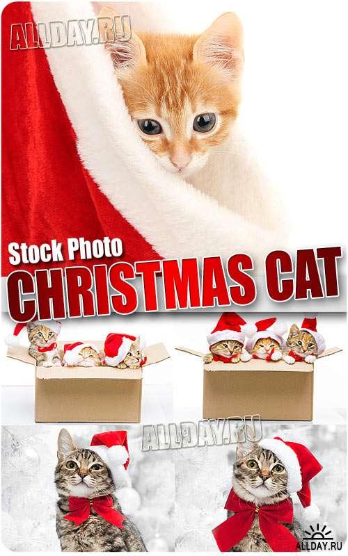 Новогодние коты - Растровый клипарт