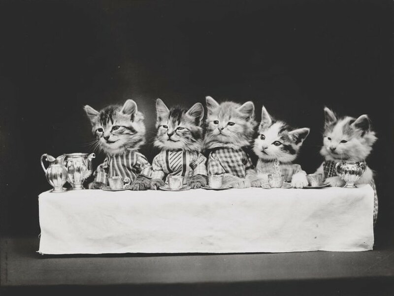 «Голодная компания», Гарри Уиттьер Фрис.