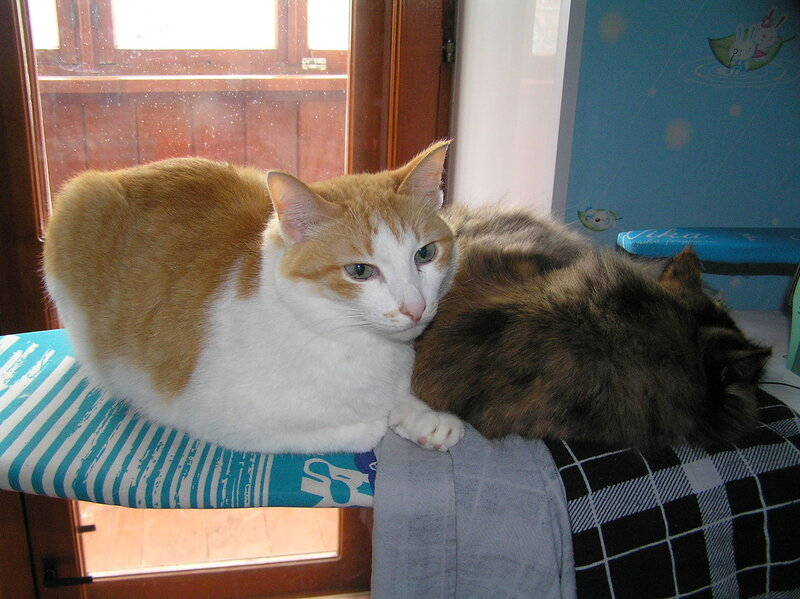 Лежбище котиков