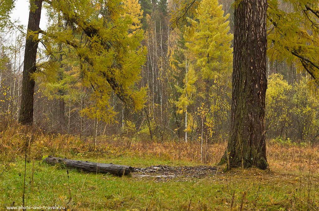 Фотография 5. Поход выходного дня. Реликтовые деревья в парке Оленьи ручьи.