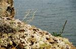 Baikal2005-0024.JPG