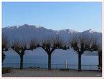 деревья, что держат горы