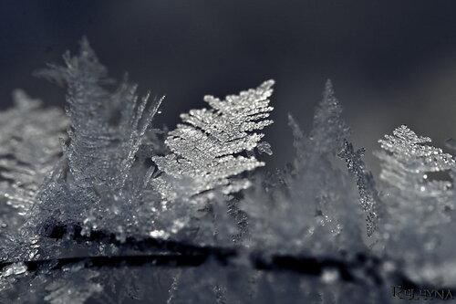Ледяной лес