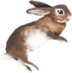 priss_flutteringleaves_rabbit8.1.png