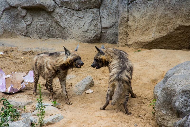 kyiv_zoo-60.jpg