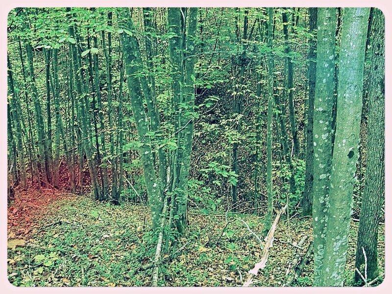 11 октября 2008, под Горячим Ключом, в лесу (6).JPG