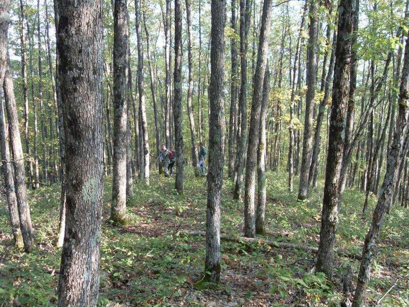 12 октября 2008, под Горячим Ключом, лес (90).JPG