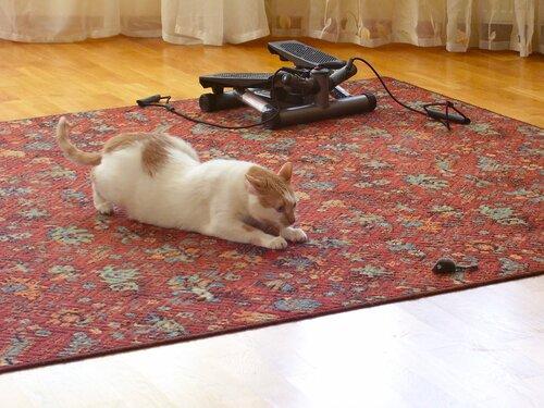 Там мышь...*