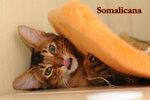 Somalicana Botichelli 4,5 month