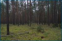 http://img-fotki.yandex.ru/get/3203/15842935.18a/0_d5db1_9626d286_orig.jpg