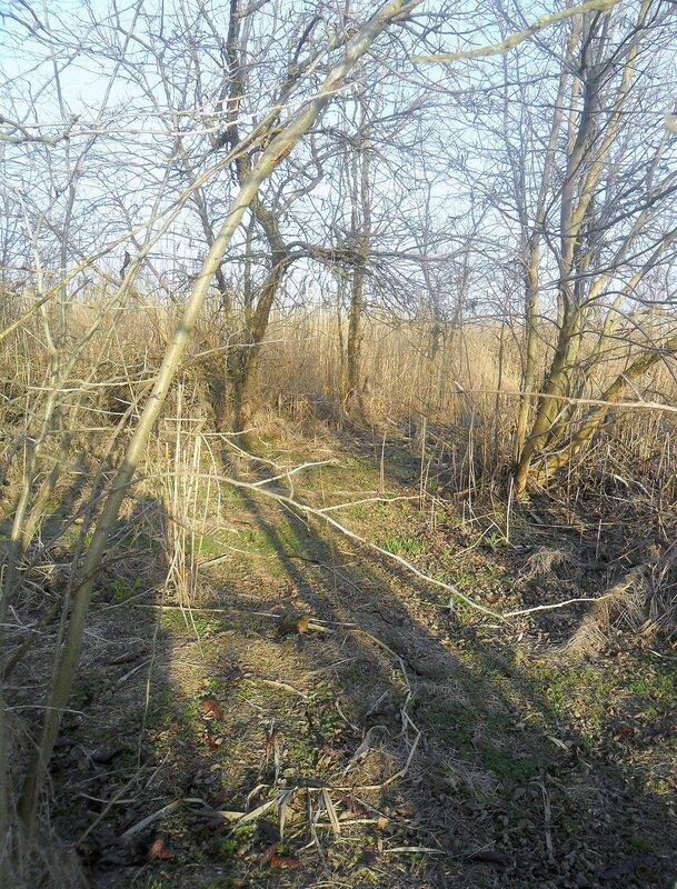 В лесу... SAM_5528.JPG