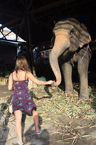 катание на слонах бананы кормление слон девочка и слон