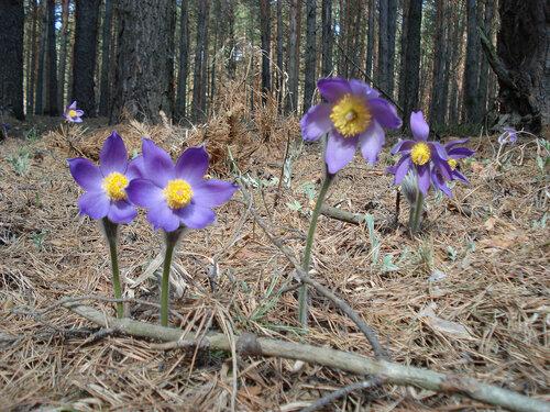 Альбом: цветы и другое Сон трава Автор фото: Олег Селиверстов