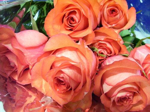 Красные розы**