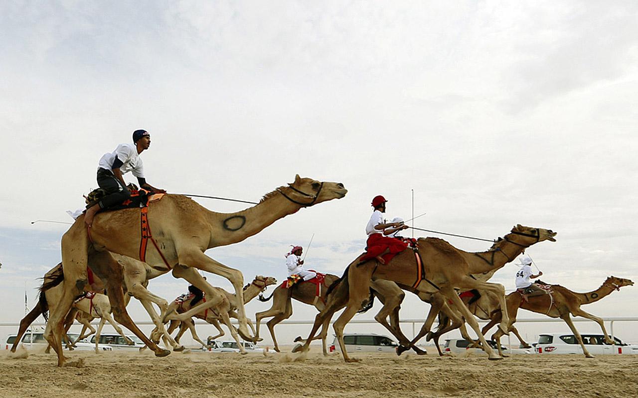 Жокеи соревнуются на верблюдах во время верблюжьего фестиваля Mazayin Dhafra 150 км. от Абу-Даби, ОАЭ