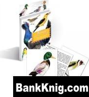 Книга Птицы наших лесов. Дидактические карточки. jpg 7,2Мб