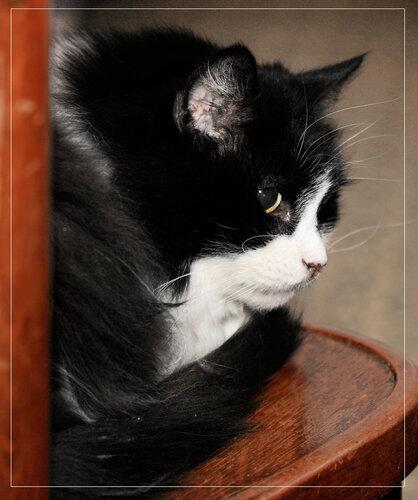darial3 — «кот» на Яндекс.Фотках