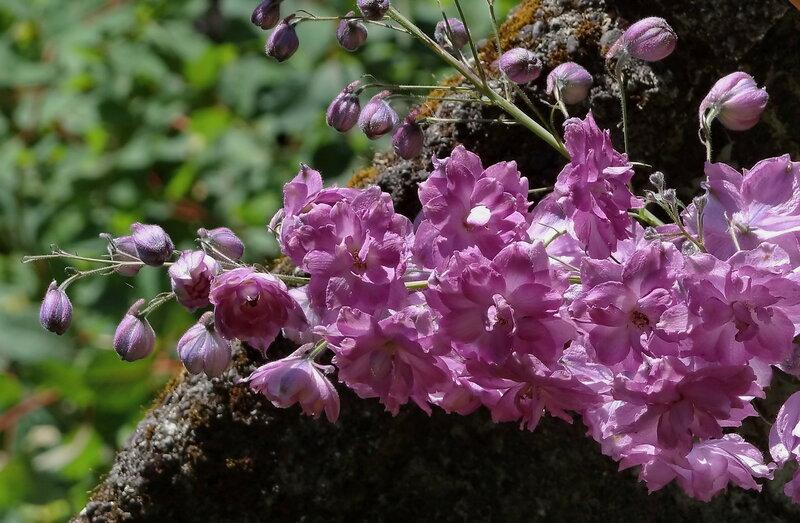 Цветы Новой Зеландии