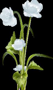 цветы-травинки