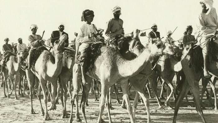 Караван верблюдов следует через Дубай. 1960-е.
