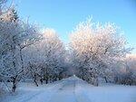 Яблони в снегу