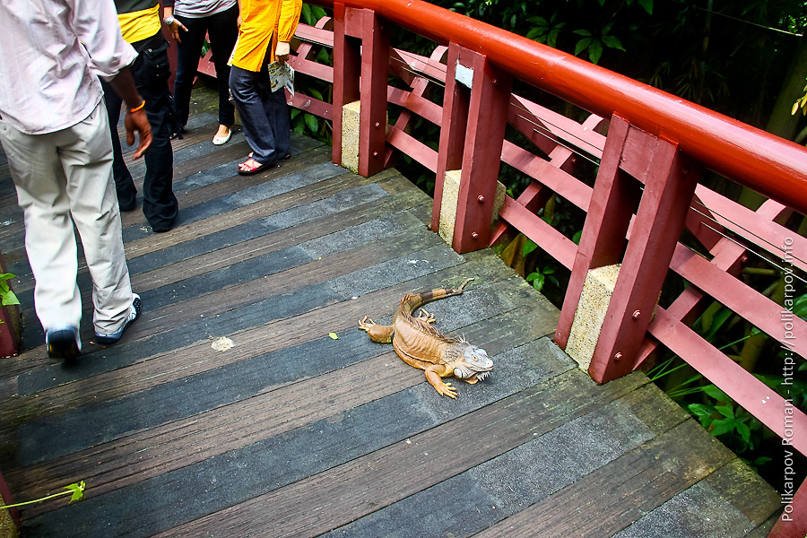 0 c4fc8 a17b70e7 orig Парк птиц Jurong в Сингапуре