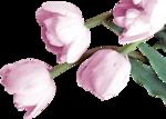 RomanticTulips_TubedByGini_10-21-06.png