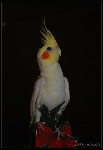 Новогодний попугай