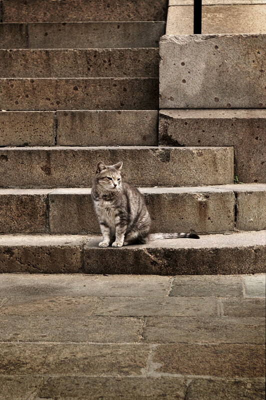 Кошка на ступеньках Владимирского Собора