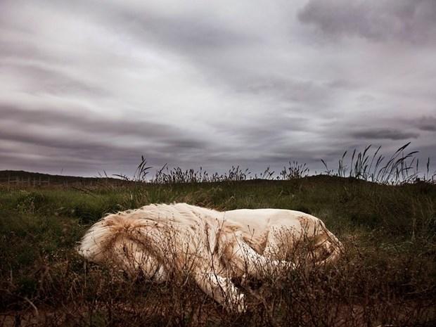 Лучшие фото животных 14 20 января от NG