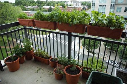 orangereia-na-balkone-9.jpg