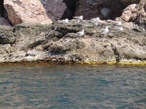 Балаклава, морские чайки