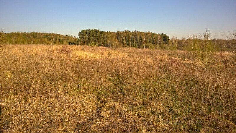 Заболоченная поляна около Рождественно-Суворово