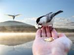 klipart-pticy-zhuravli1.png