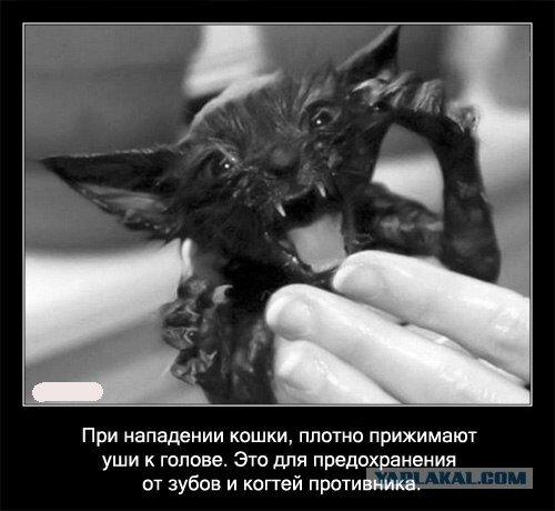 Интересные факты о кошках в картинках, 90 штук