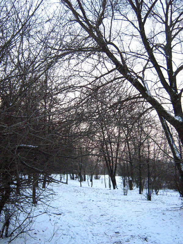 Сплетясь ветвями