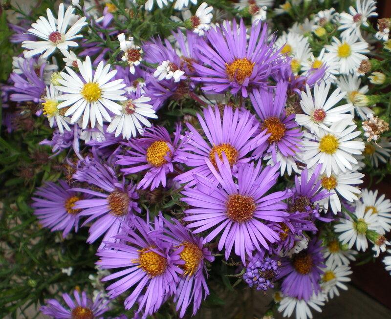 Цветы на яндекс фотках осенние цветы