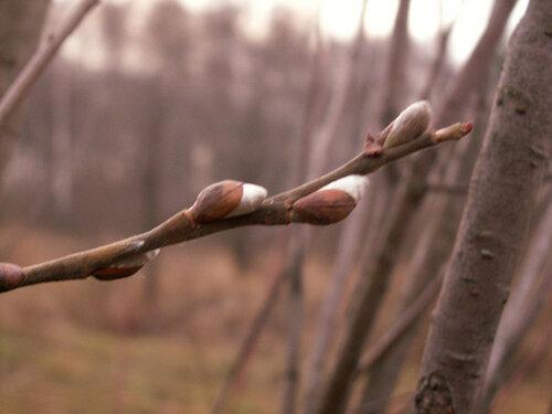 Аномально тёплый декабрь в Молдове сменяется холодами