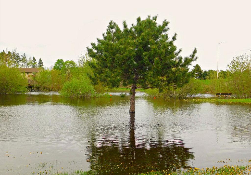 После дождика в четверг