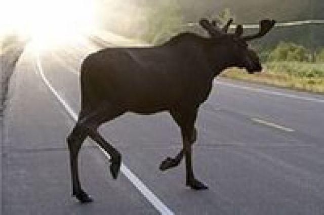 Управление по охране и использованию объектов животного мира Татарстана