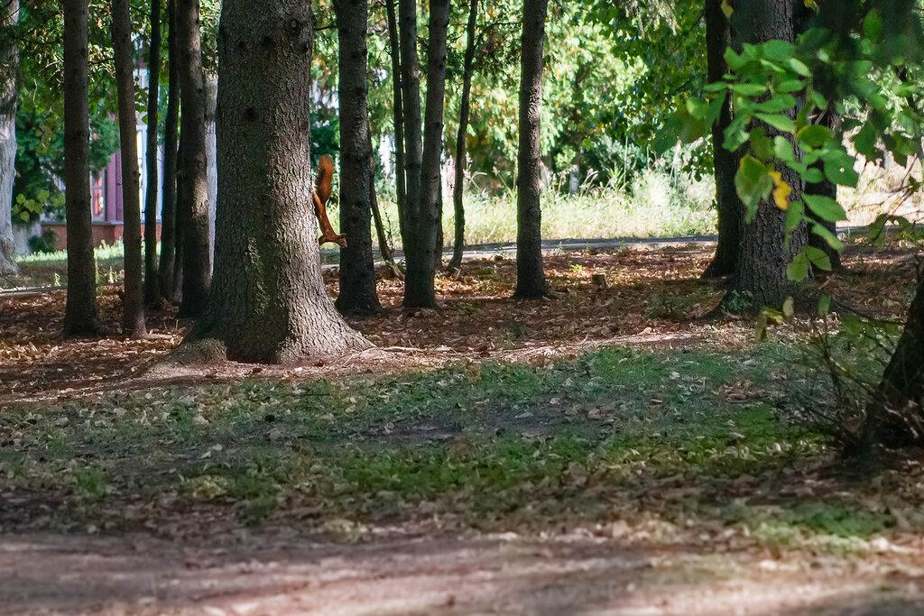 Лес на Ворскле