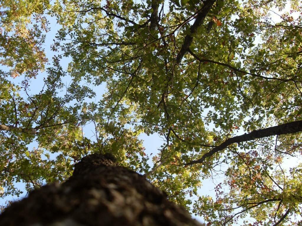 12 октября 2008, под Горячим Ключом, в лесу (93).JPG