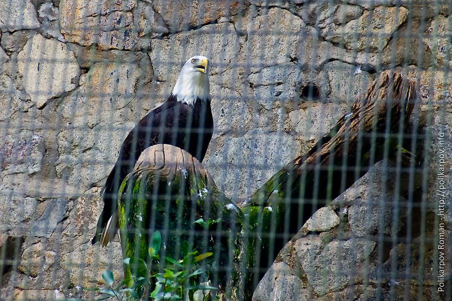 0 c4fd0 ef2f087 orig Парк птиц Jurong в Сингапуре