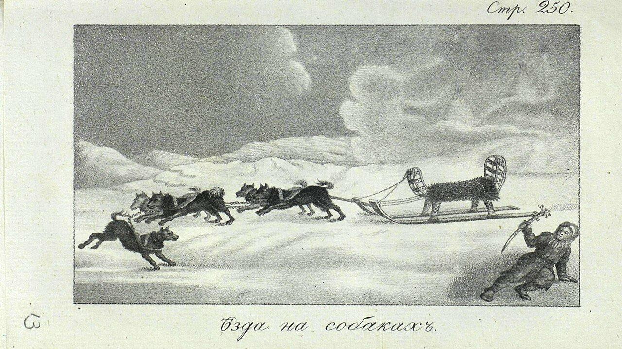 11. Езда на собаках