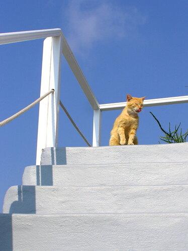 Санторини - черно-белый рай для рыжих котов
