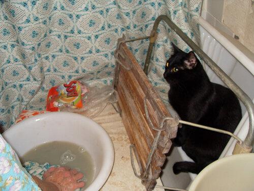 Черный кот 1