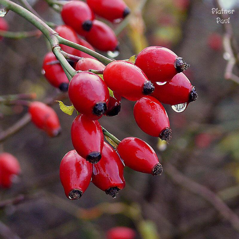 декабрь в лесу...